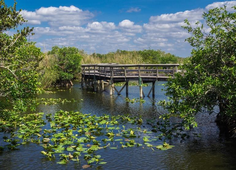 Anhinga Trail - Royal Palm Visitor Center