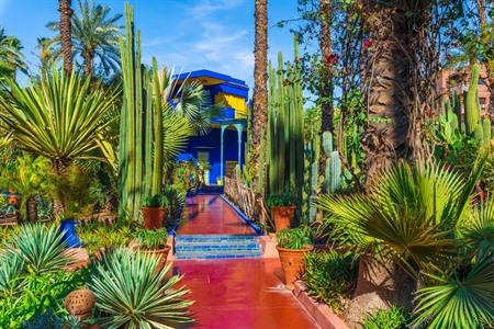 De Majorelletuin in Marrakesh bezoeken? Info, tips & tickets
